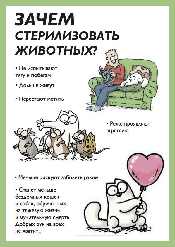 Все о кастрации кота: плюсы и минусы операции, ее виды, проведение и реабилитационный период