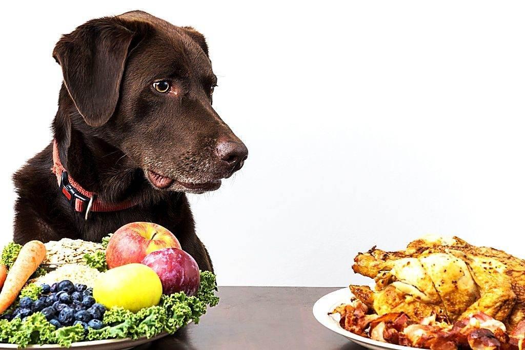Принципы кормления собак.