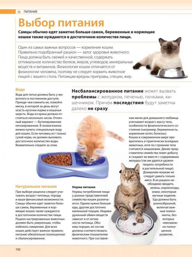 Рацион кастрированного кота и кошки