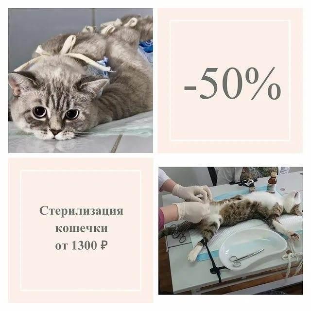 Кастрация и стерилизация. животных