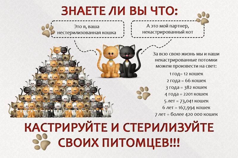 """Кастрация котов и стерилизация кошек: все аргументы """"за"""" и """"против""""   блог ветклиники """"беланта"""""""