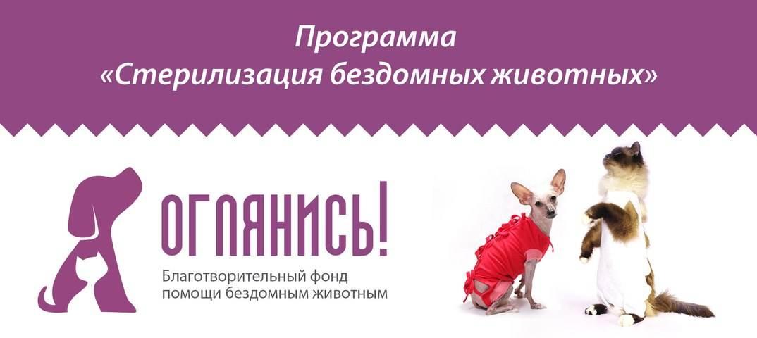 Стерилизация собак - преимущества и недостатки, подготовка к стерилизации и методы проведения, а также послеоперационный уход за собакой