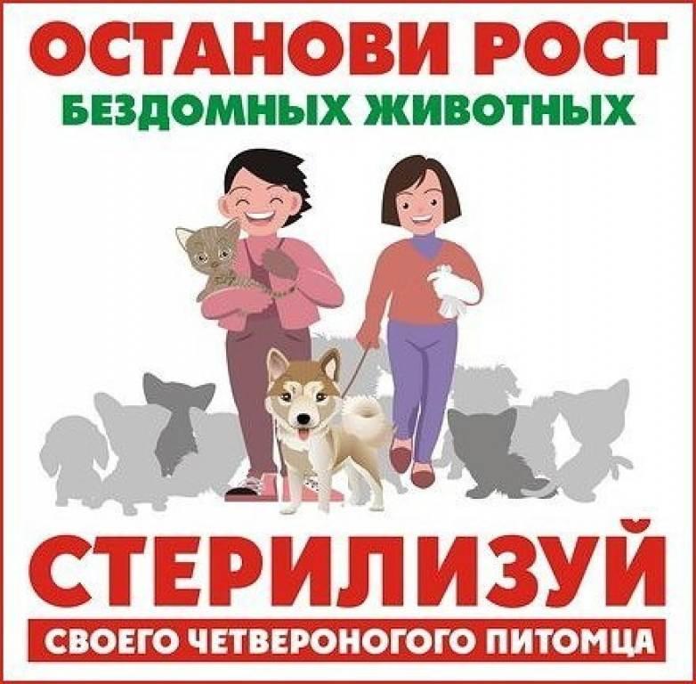 Стерилизация и кастрация кошек - что нужно знать   блог о домашних животных