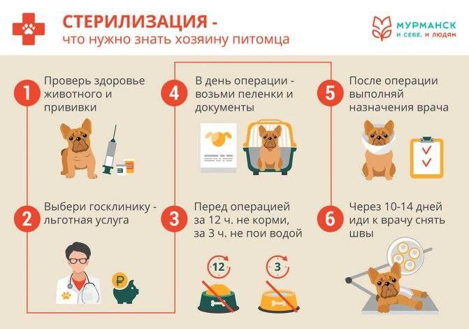 Стерилизация собак: все за и против