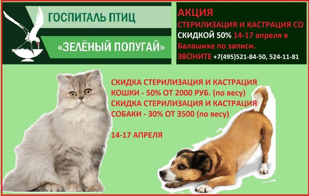 Кастрация кота в ветеринарной клинике.