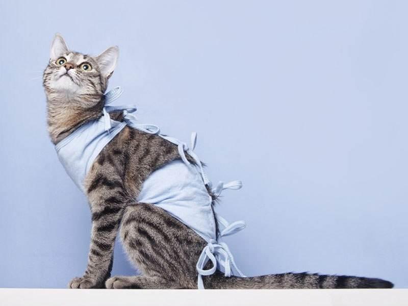 Кастрация кота: все что нужно знать