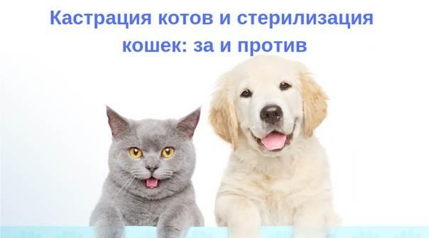 Стерилизация кошек и кастрация кота
