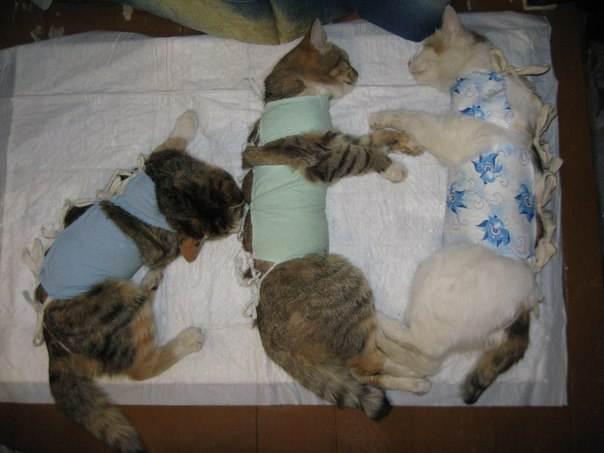 Ветеринарные клиники зоовита