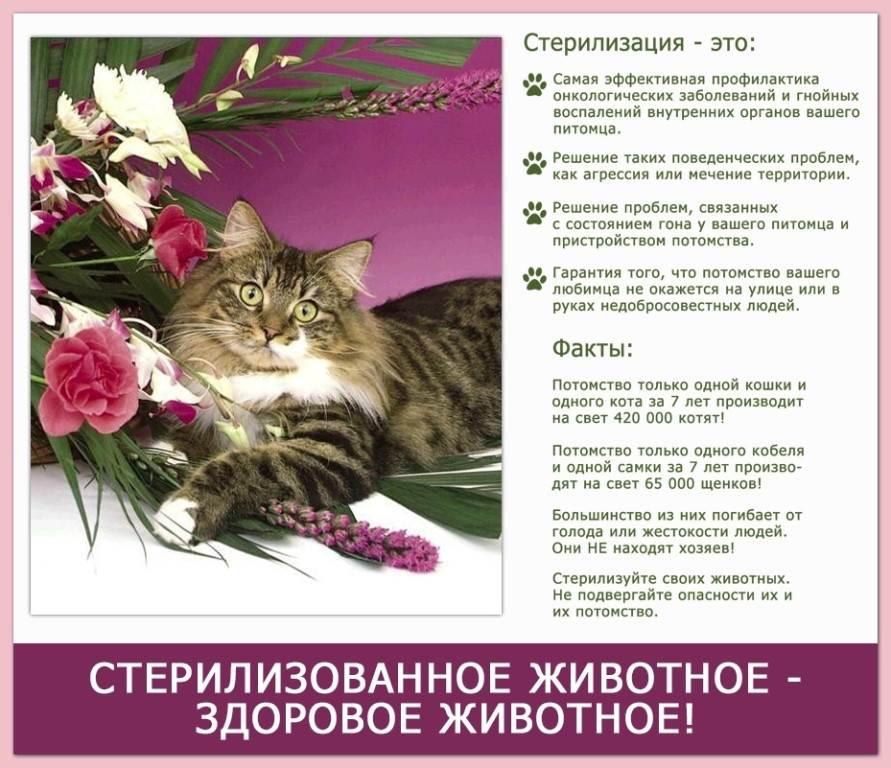 Стерилизация кошки: цены 2020, уход после, последствия