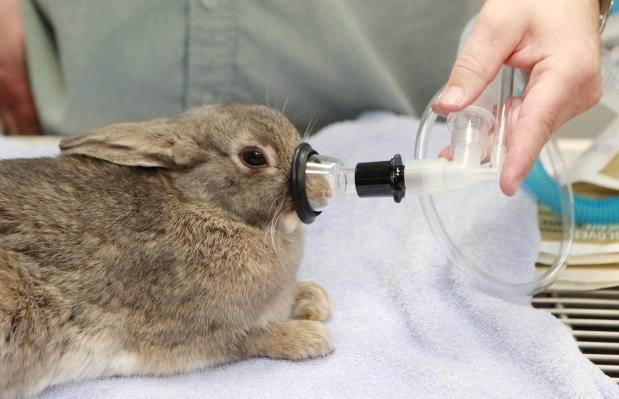 Применение ингаляционной анестезии у животных