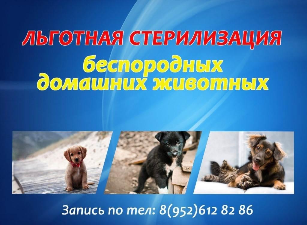 Кастрация собак и кошек - плюсы и минусы операции   ветклиника зоостатус