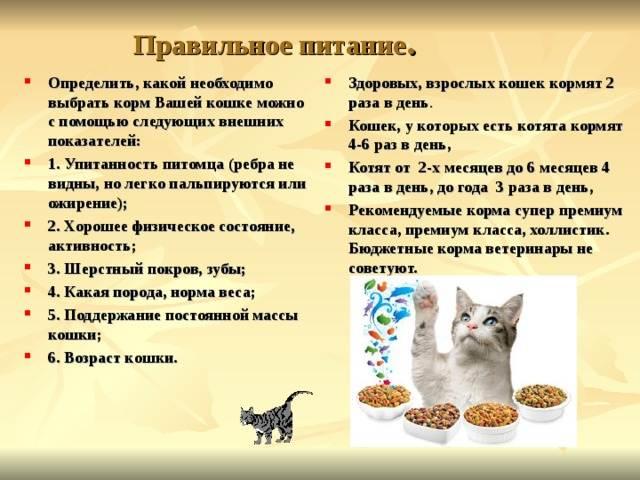 Чем кормить кастрированного кота в домашних условиях?