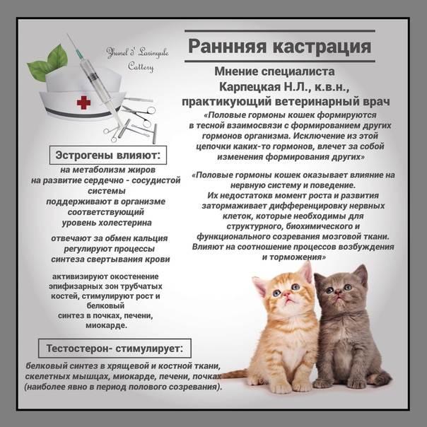 Уход за кошкой после стерилизации советы
