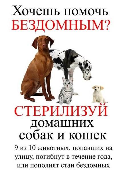 Стерилизация собак за и против, советы и рекомендации