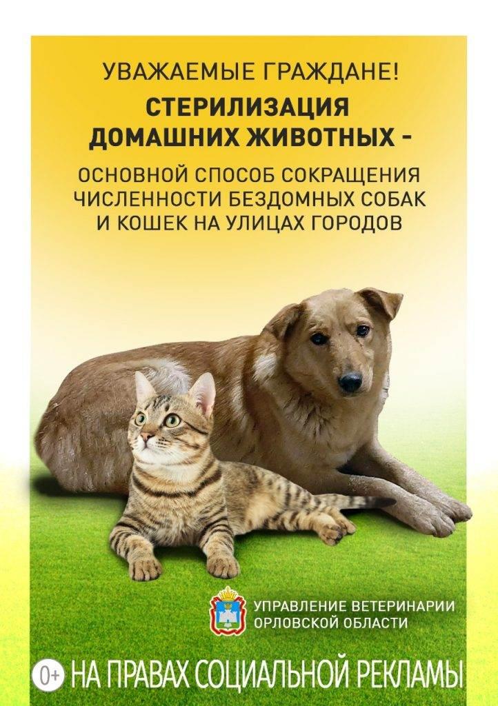 Эндоскопическая стерилизация: мнение ветеринарного врача ʕᵔᴥᵔʔ зоовита ветеринарные клиники в казани