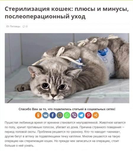 Кастрация котов и кошек: отзывы владельцев, особенности проведения процедуры, на что обратить внимание