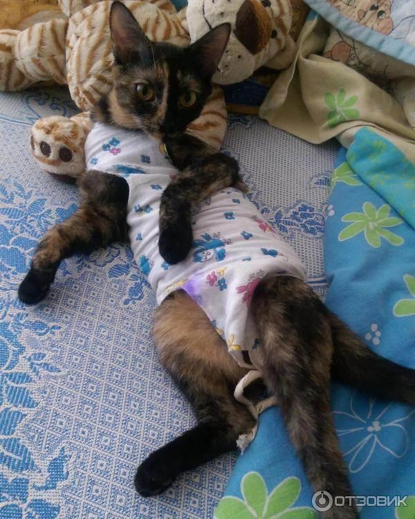 Стерилизация кошек: плюсы и минусы, как проводят и что делать после нее