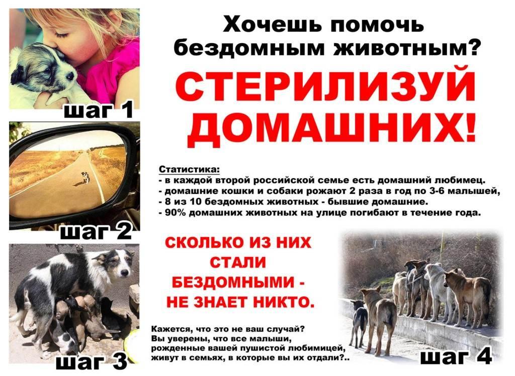 Кастрация и стерилизация животных