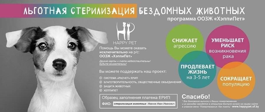 Стерилизация собак - плюсы и минусы, виды стерилизации и их особенности