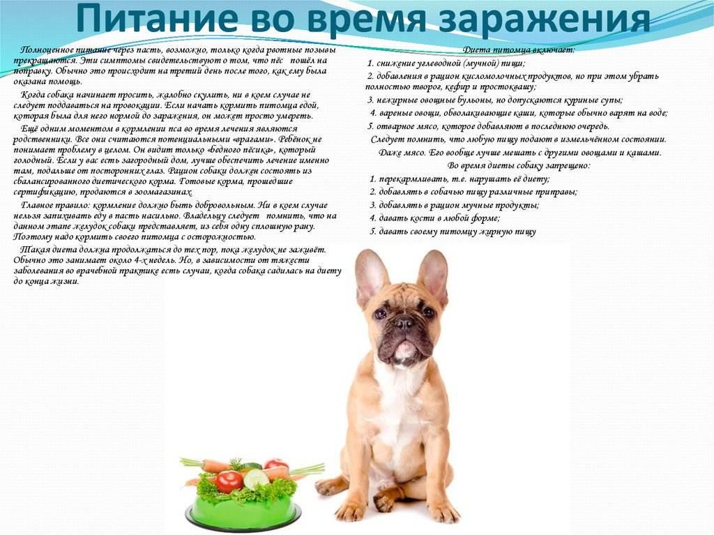Можно ли собакам острое – лук, чеснок и перец?