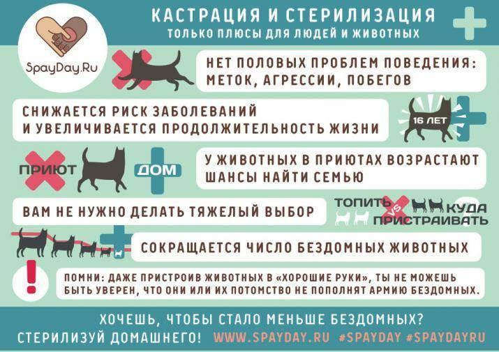 Все о стерилизации кошек: нужно ли проводить операцию, подготовка и этапы процедуры, уход за животным в постоперационный период