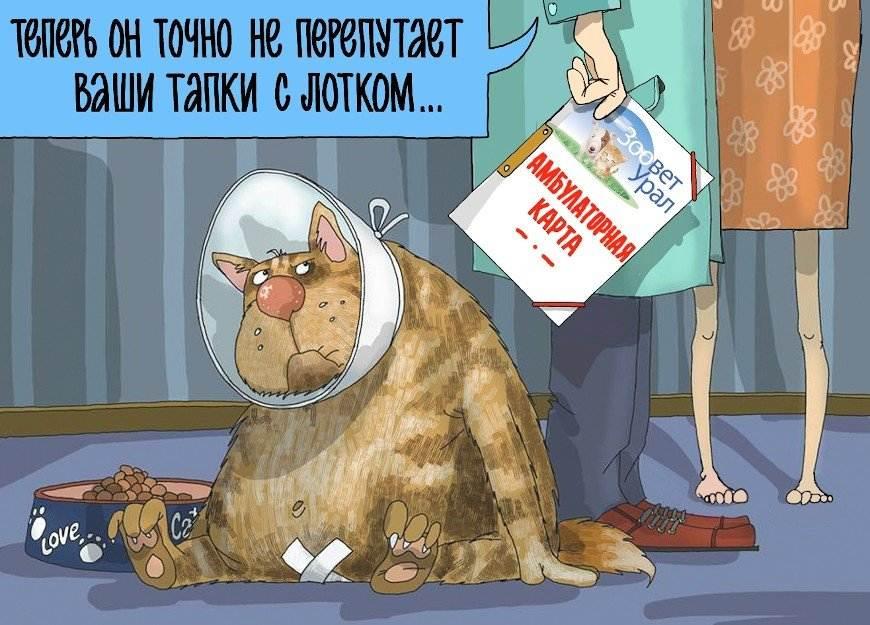 Кастрация собак и кошек: плюсы и минусы операции