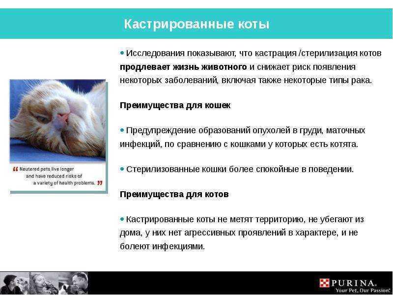 Нужно ли кастрировать кота, вред и польза кастрации