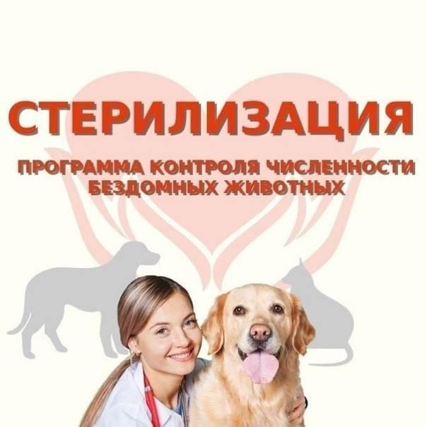 Основные виды стерилизации кошек и собак   ветпрактика
