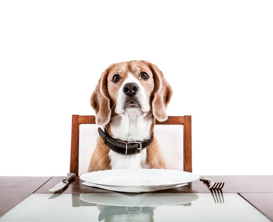 Как правильно кормить стерилизованную собаку? какой корм выбрать для стерилизованной собаки? сколько стоит стерилизация собаки в краснодаре? чем кормить собаку после стерилизации. корм для кастрирован