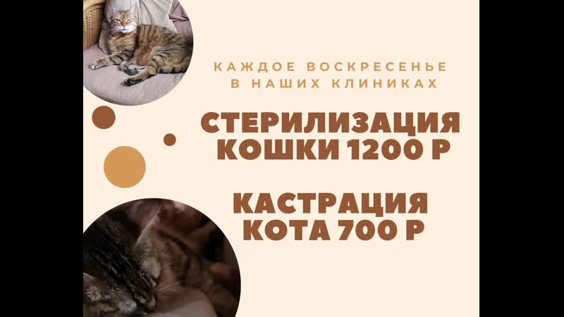 Кошка после стерилизации - ветеринарная клиника нефрологии веравет. ветеринар на дом