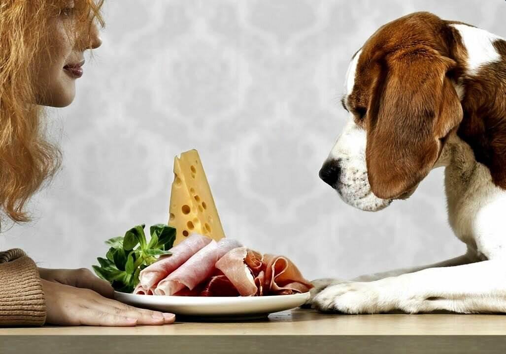 Рейтинг кормов для стерилизованных и кастрированных собак 2020