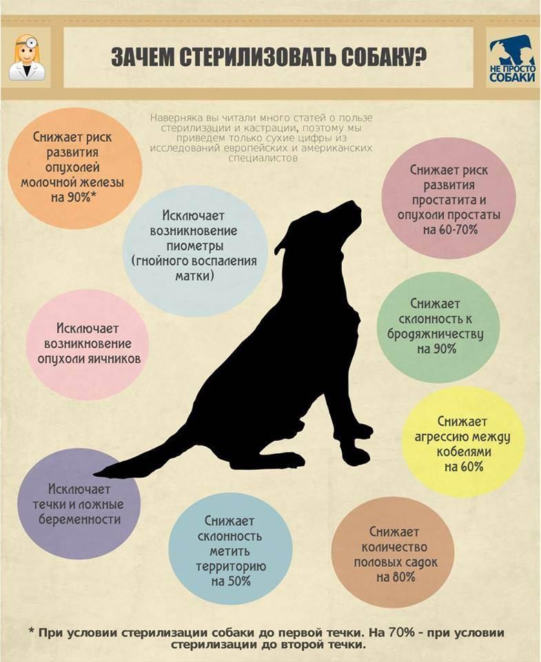 Корм для стерилизованных собак: обзор популярных марок