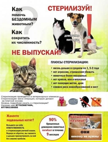 Стерилизация и кастрация собак: до какого возраста можно, осложнения, уход - kotiko.ru