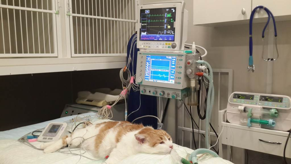 Ингаляционная анестезия и интубация кроликов