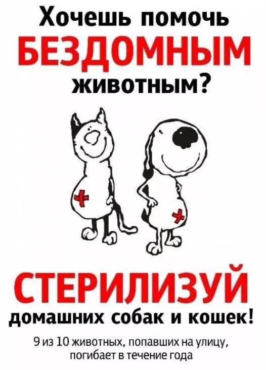 Кастрация или стерилизация: различия и что выбрать