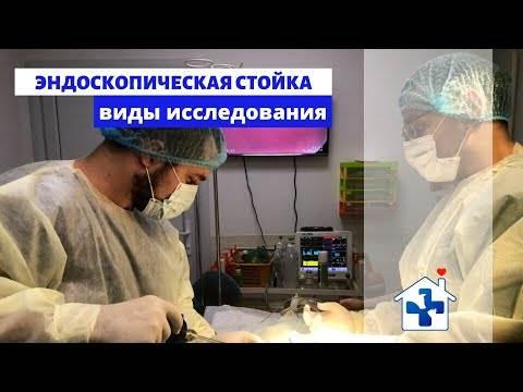 Как проходит эндоскопическая стерилизация кошек