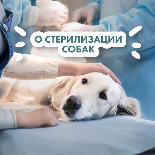 Стерилизация собак: это нужно знать