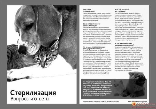 Стерилизация и кастрация собак: плюсы и минусы, проведение процедуры у сук и кобелей, подготовка и восстановительный период