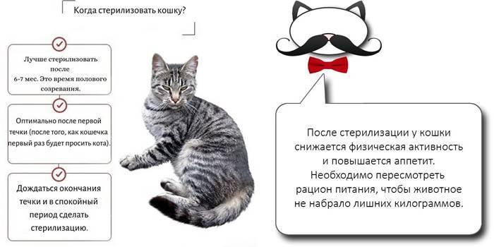 Всё о кастрации котов: когда кастрировать, виды кастрации, операция, уход, осложнения, плюсы и минусы - vet-call24 киев