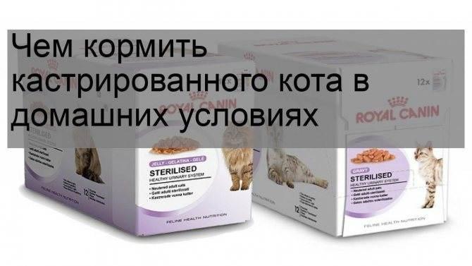 Чем кормить кастрированного кота, каким кормом кормить стерилизованного кота
