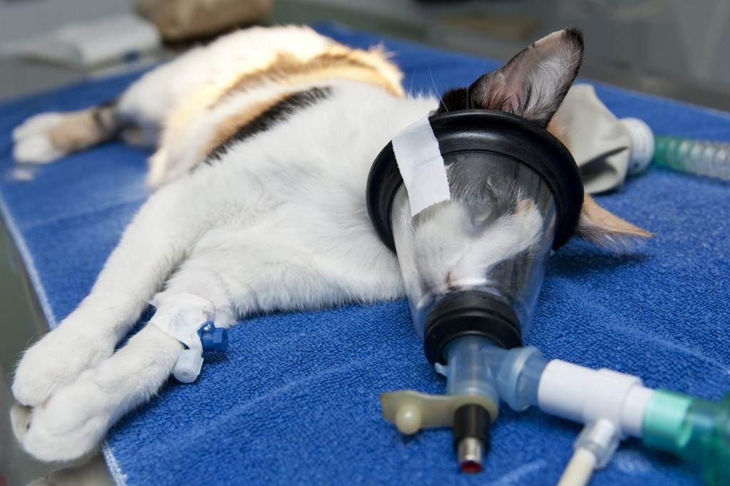 Общие принципы анестезии у собак и кошек