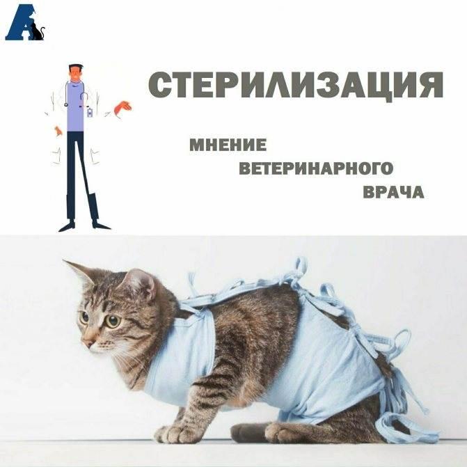 Стерилизация кошек: виды операции, этапы проведения процедуры, подготовка, подходящий возраст, уход за кошкой после стерилизации
