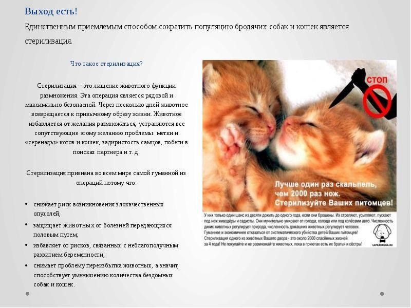 Стерилизация и кастрация собак: до какого возраста можно, осложнения, уход