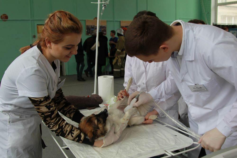Стерилизация собак
