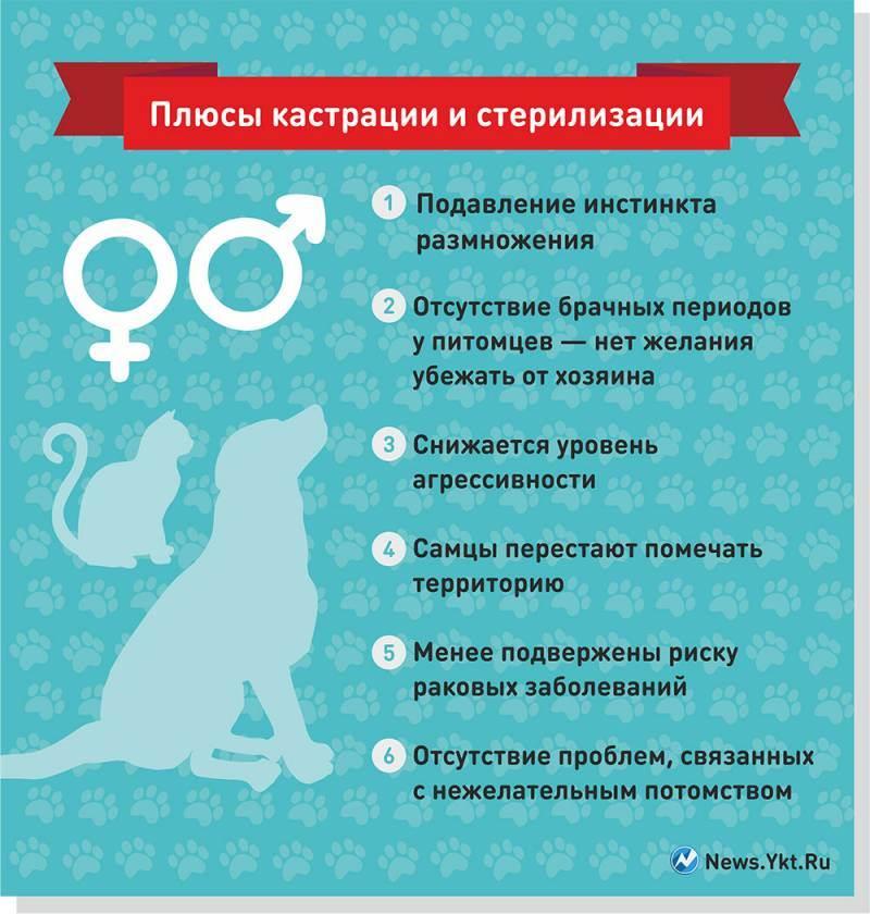 Стерилизация и кастрация животных. ветеринарные услуги. перевозка животных по россии. зоотакси