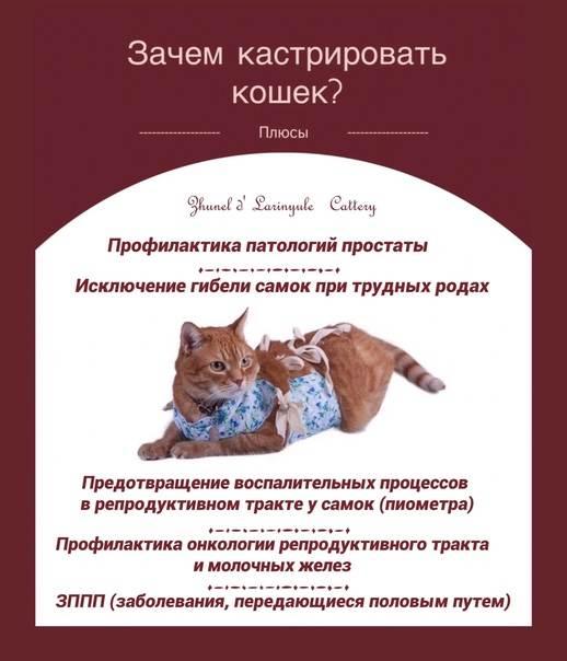 Всё о методах кастрации кота