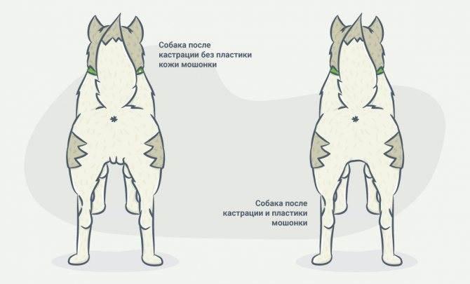 Стерилизация собак в ветеринарной клинике