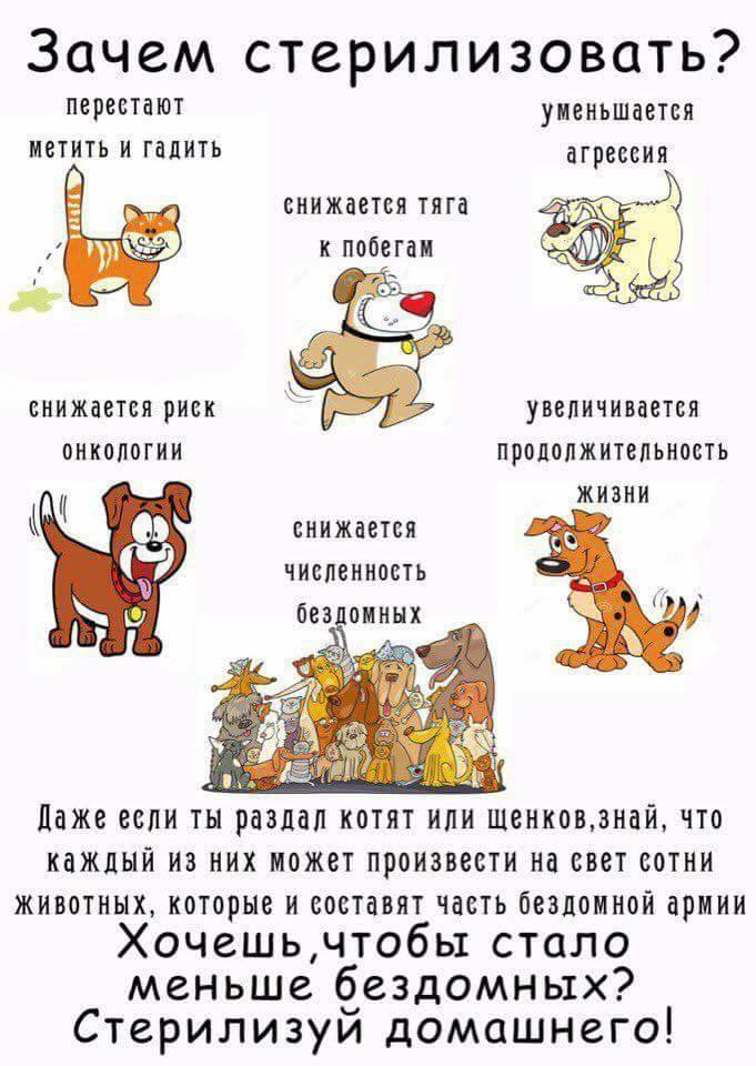"""Мифы о кастрации собак и кошек. ветеринарная клиника """"зоостатус"""""""