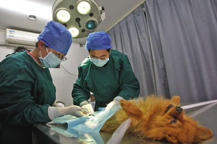 Кастрация и стерилизация собак: все за и против, особенности проведения процедуры и рекомендуемый возраст