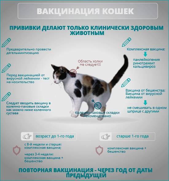 Как ухаживать за собакой после стерилизации?